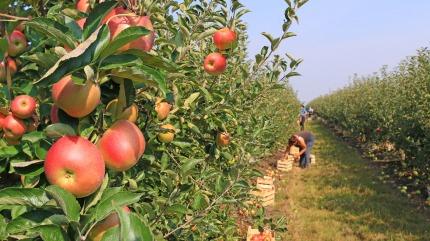 Survey on certain species of fruit trees 2017