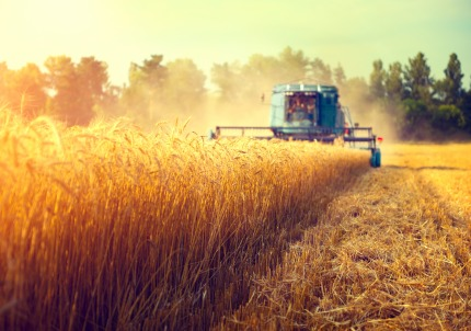Agricultural holdings twice as large in Wallonia