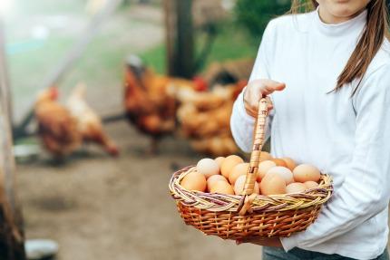 Die Preise für Eier und Milch sind wieder gesunken
