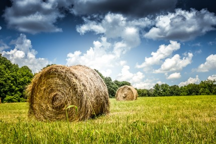 Some bright spots after a historically difficult year 2018 for the agricultural sector