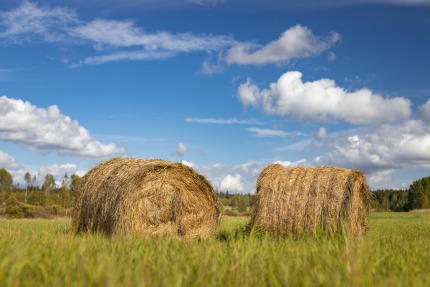 Second forecasts of the economic accounts for agriculture