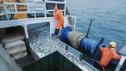 Very low landings of fish in Belgian ports in May