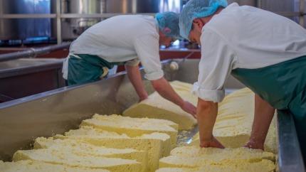 Produktion von Milcherzeugnissen im Juli 2019